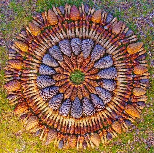Flower mandalas by artist Kathy Klein