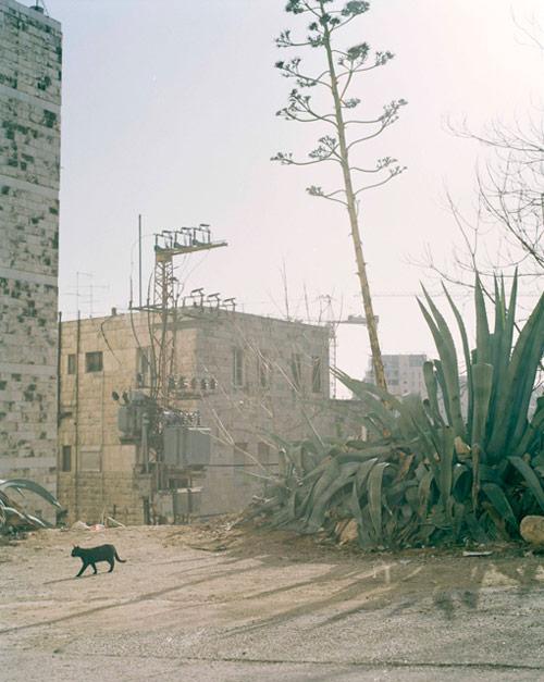 Photographer Neta Dror