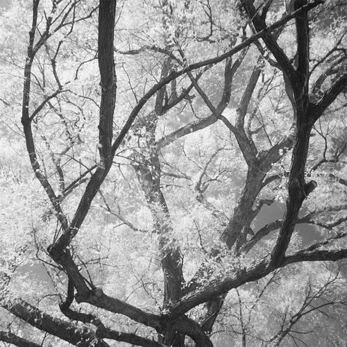 Photographer Toshiya Watanabe