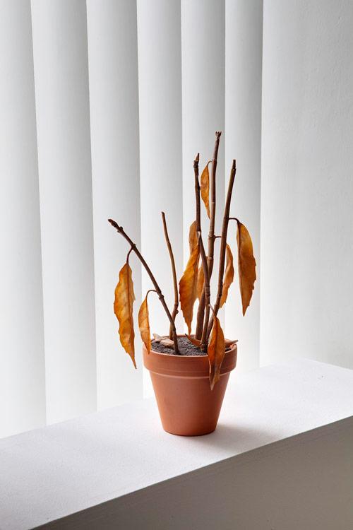 dead plastic plant by artist julien berthier
