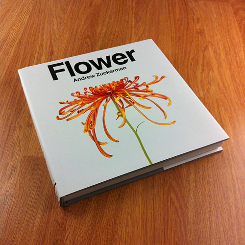 Flower by photographer Andrew Zuckerman