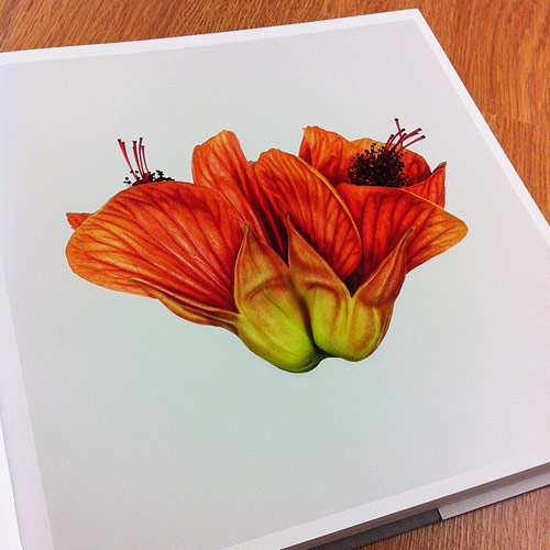 Flower by photographer Andrew Zuckerman