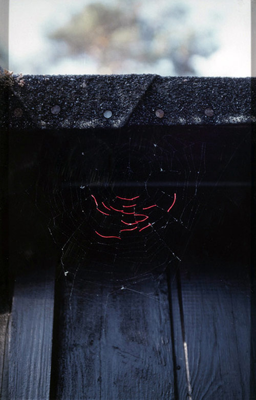 Mended Spiderwebs by Nina Katchadourian