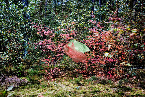 Photographer Beatrice Jansen