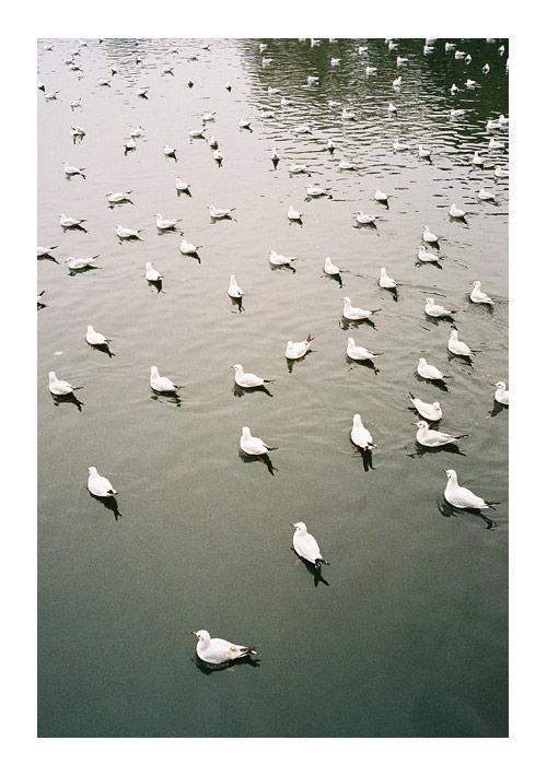Photographer Shen Li