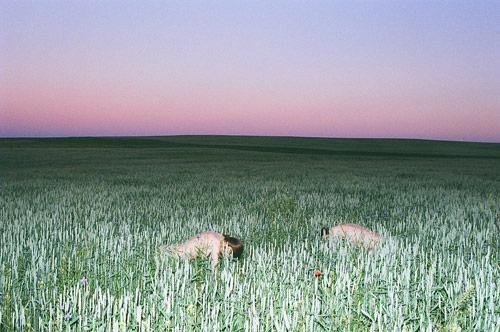 Photographers Synchrodogs Tania Shcheglova and Roman Noven