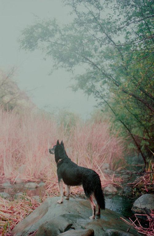 Photographer Matthew Tammaro