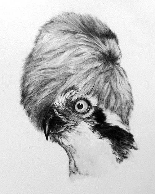 Pencil drawings by artist Susan Rotondo