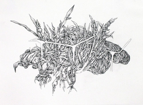 Drawings by artist Allyce Wood