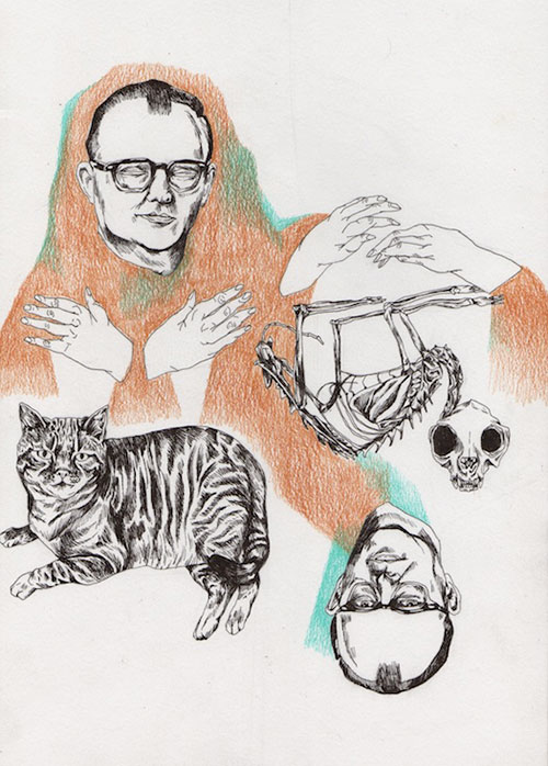 pencil illustrations by Camille Smithwick
