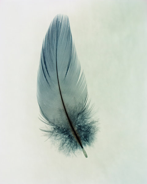 taylormcurry-feathers-01