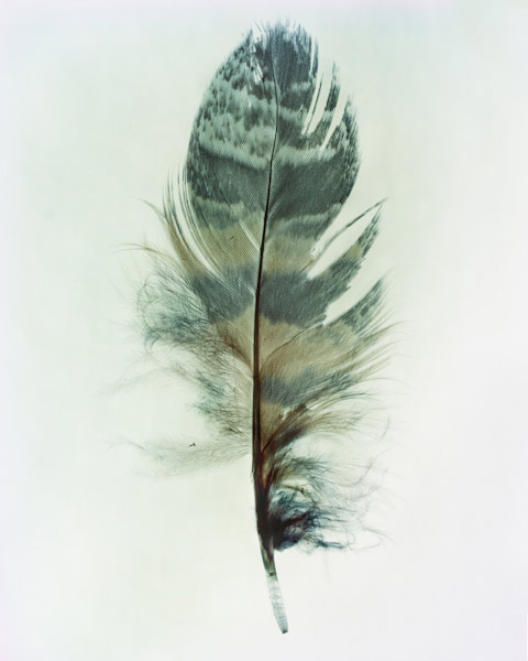 taylormcurry-feathers-02