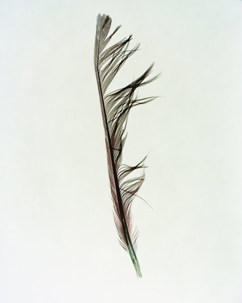 taylormcurry-feathers-05