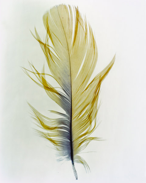 taylormcurry-feathers-08
