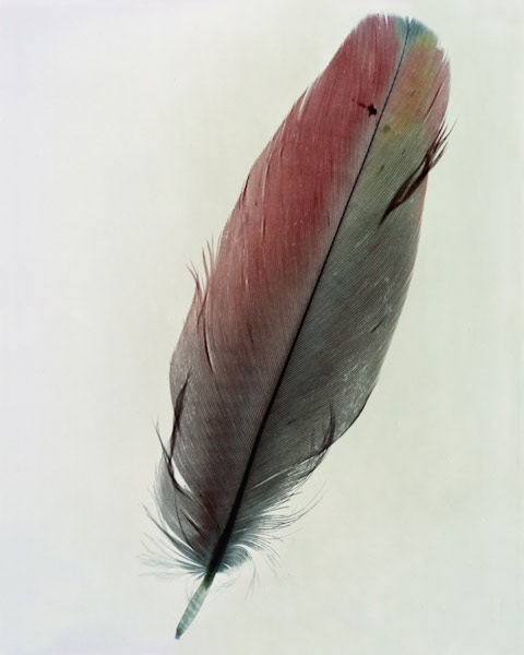 taylormcurry-feathers-09