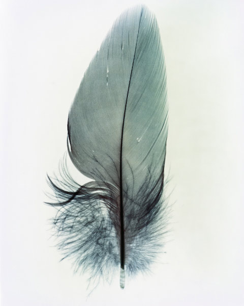 taylormcurry-feathers-14