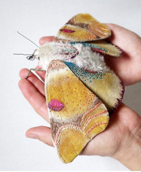 beautiful moths