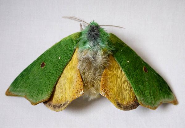 yumi-okita-moths-15