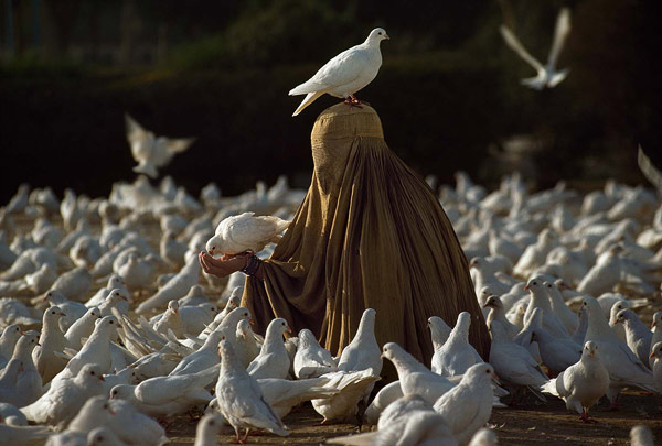 stevemccurry07