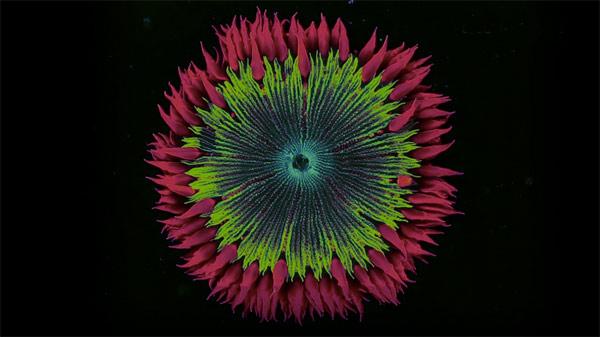 Coral-Morphologic