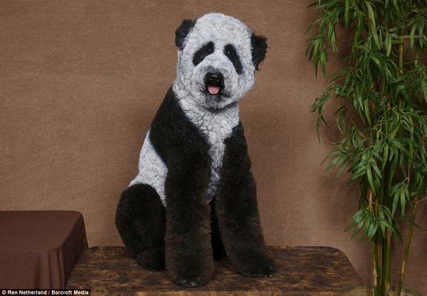 poodle-art-grooming-07