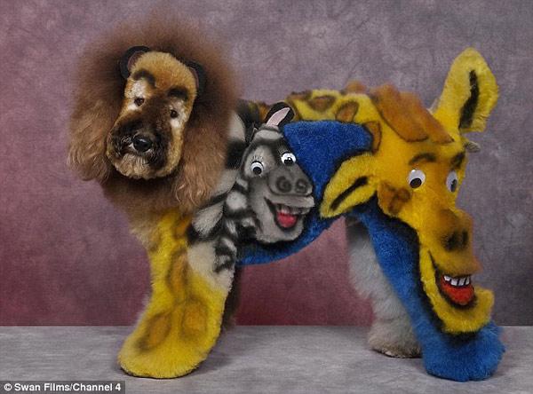 poodle-art-grooming-09