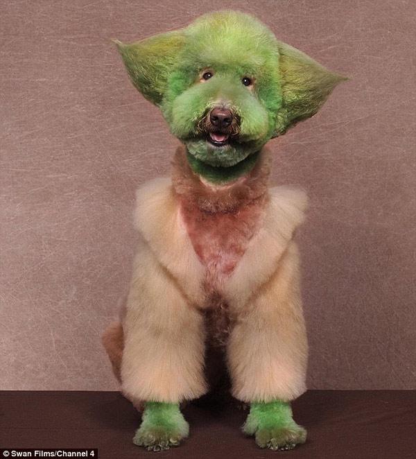 poodle-art-grooming-10