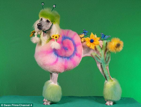 poodle-art-grooming-11