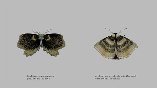 mothgenerator1