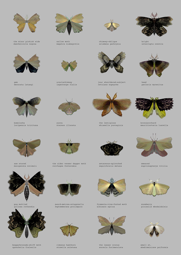 mothgenerator10
