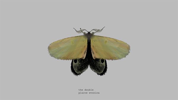 mothgenerator11