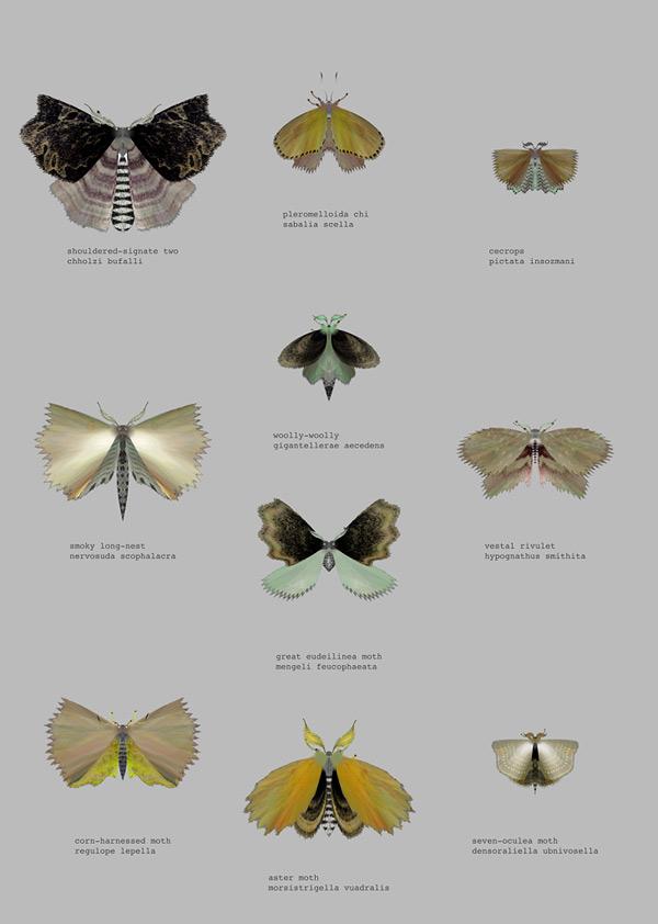 mothgenerator2