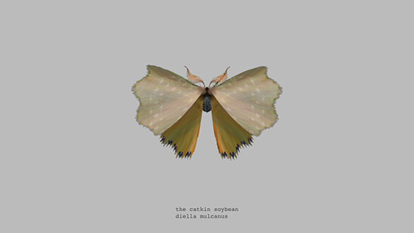 mothgenerator3