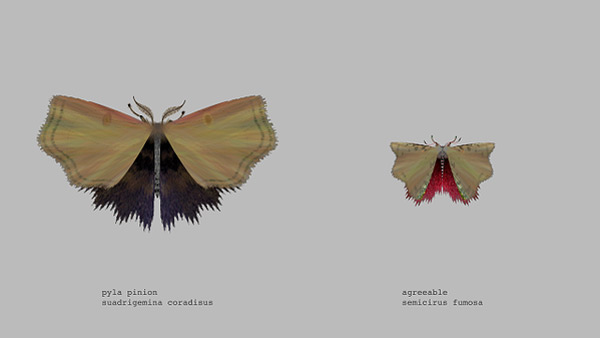 mothgenerator4