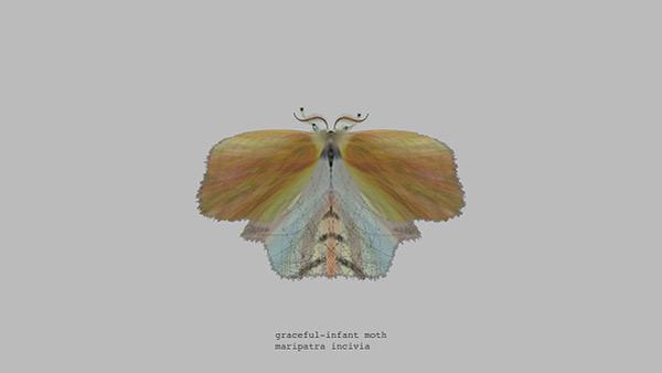 mothgenerator5