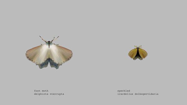 mothgenerator6