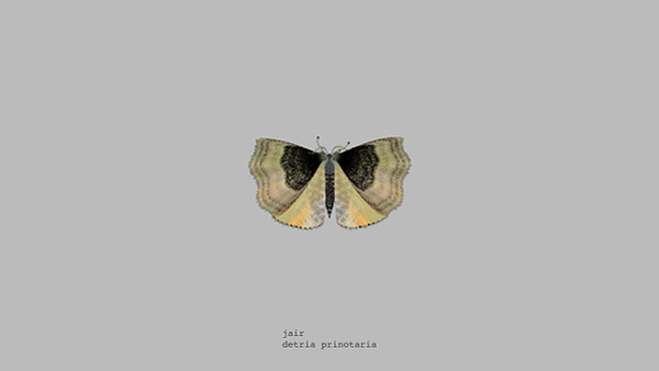 mothgenerator8