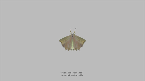 mothgenerator9
