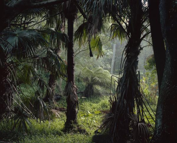 tropicale_woutervandevoorde-1-2