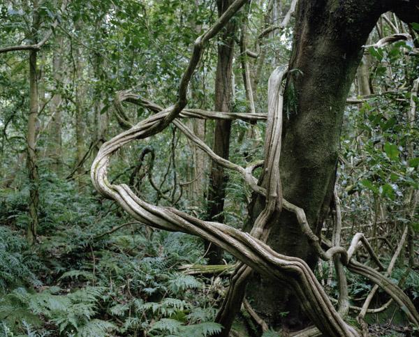 tropicale_woutervandevoorde-10-2