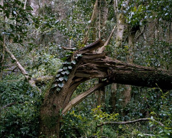 tropicale_woutervandevoorde-11-2