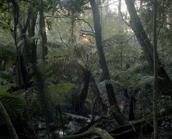 tropicale_woutervandevoorde-12-2