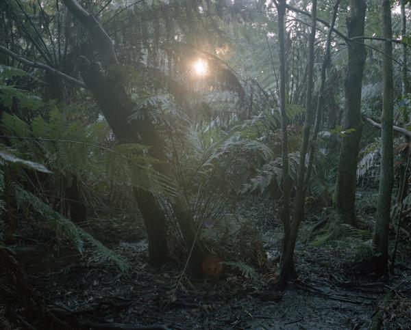 tropicale_woutervandevoorde-13-2