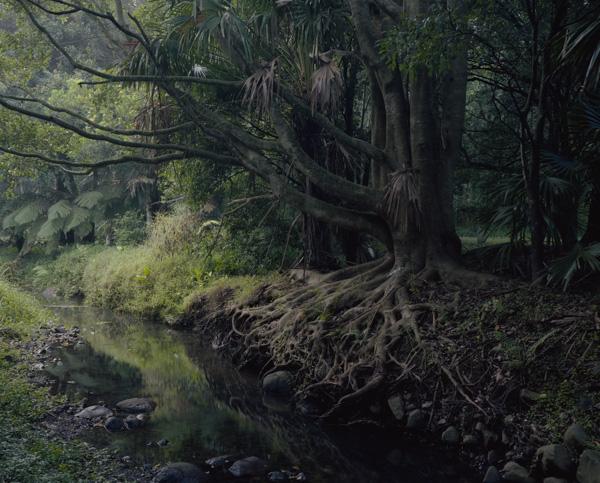 tropicale_woutervandevoorde-2-2