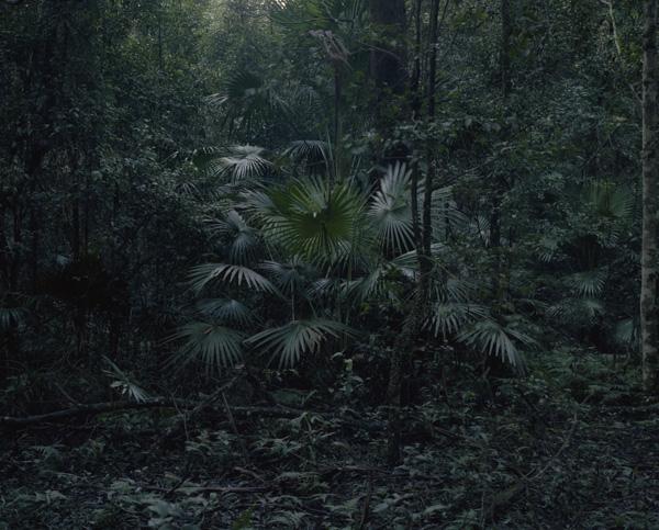 tropicale_woutervandevoorde-3-2