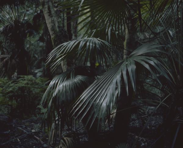 tropicale_woutervandevoorde-4-2