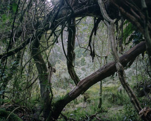tropicale_woutervandevoorde-8-2
