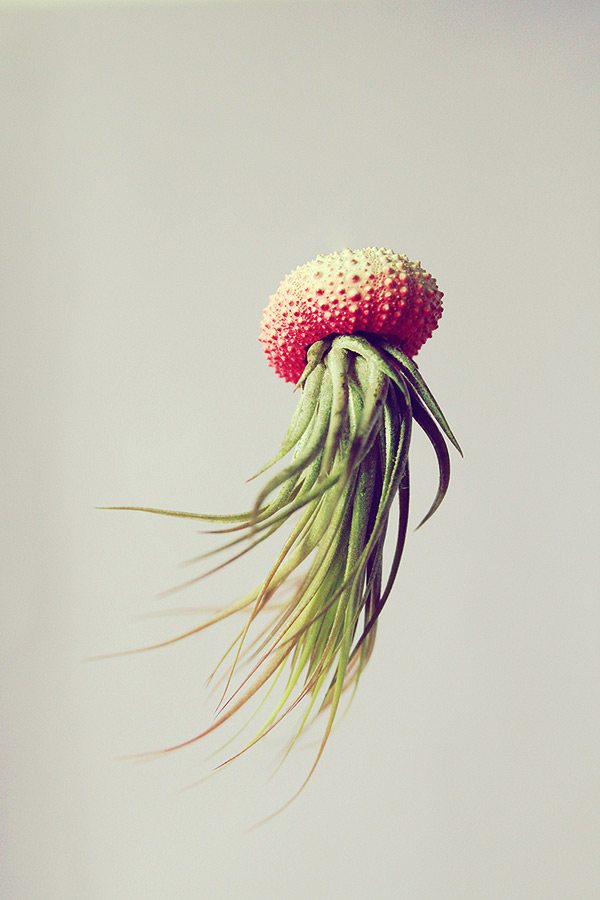 Jellyfish13