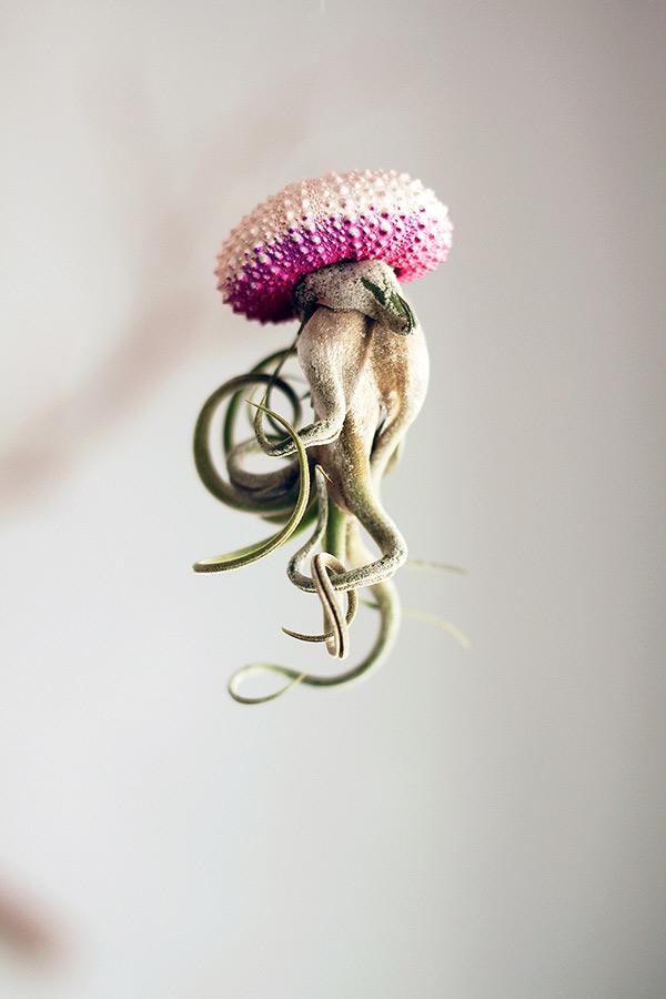 Jellyfish15