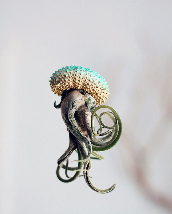 Jellyfish9